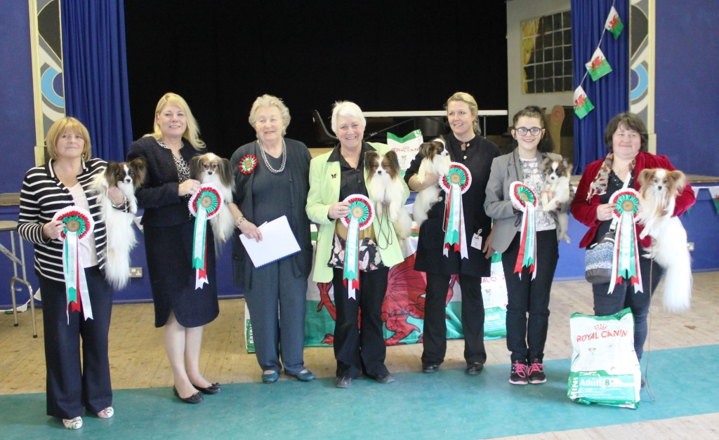 South Wales Papillon Club Open Show 2015