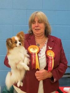 Merseyside Toy Dog Club Open Show 2015
