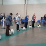 Joint Papillon Clubs Championship Show 2016
